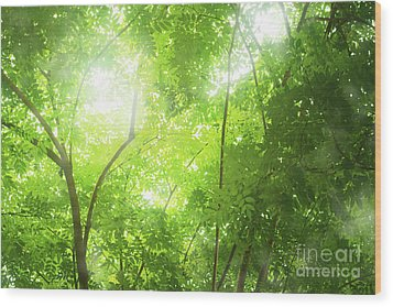 Tropical Forest Wood Print by Atiketta Sangasaeng