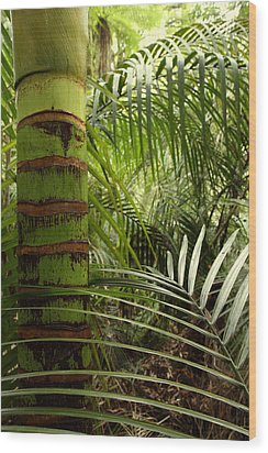 Tropical Forest Jungle Wood Print by Les Cunliffe