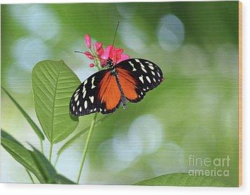 Tropical Hecale Butterfly Wood Print by Karen Adams