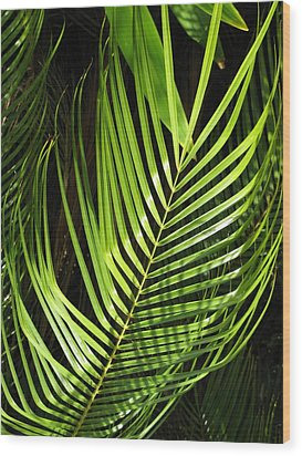Wood Print featuring the photograph Tropical Palm by Carol Sweetwood