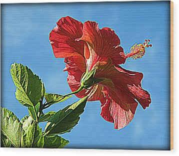Tropical Red Hibiscus  Wood Print by Rose  Hill
