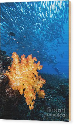 Tropical Reef Scene Wood Print by Dave Fleetham - Printscapes
