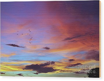 Tropical North Queensland Sunset Splendor  Wood Print