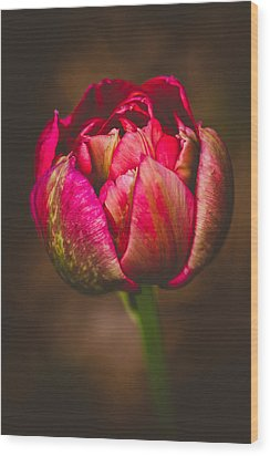 Wood Print featuring the photograph True Colors by Yvette Van Teeffelen