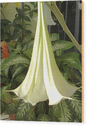 Wood Print featuring the photograph Trumpet Lily by Frederic Kohli