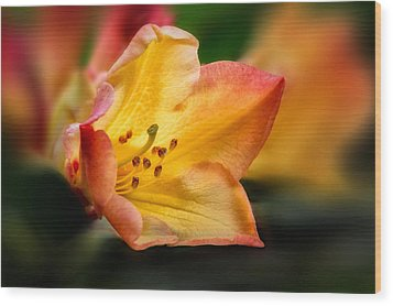 Trumpet Of Spring Wood Print by Mary Jo Allen