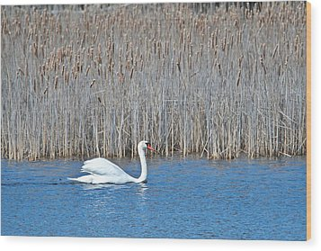 Wood Print featuring the photograph Trumpeter Swan 0967 by Michael Peychich