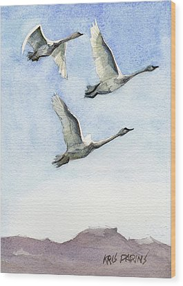 Wood Print featuring the painting Trumpeter Swan Study by Kris Parins
