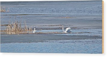 Wood Print featuring the photograph Trumpeter Swans 0933 by Michael Peychich