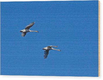 Wood Print featuring the photograph Trumpeter Swans 1726 by Michael Peychich