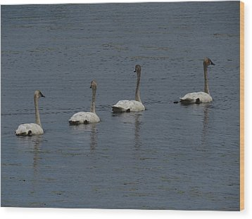 Wood Print featuring the photograph Trumpeter Swans by Sandra LaFaut
