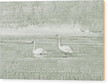 Wood Print featuring the photograph Trumpeter Swan's Winter Rest Green by Jennie Marie Schell