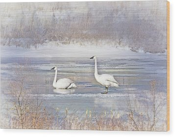 Wood Print featuring the photograph Trumpeter Swan's Winter Rest by Jennie Marie Schell