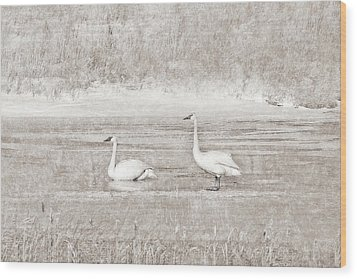 Wood Print featuring the photograph Trumpeter Swan's Winter Rest Beige by Jennie Marie Schell