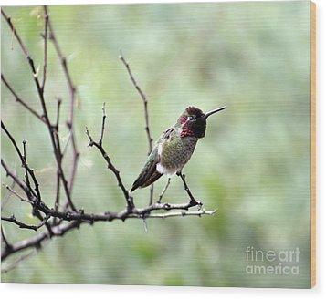 Trumpeting Hummingbird Wood Print