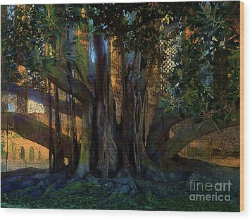 Trunks Wood Print by Robert Ball
