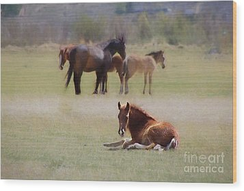 Wood Print featuring the photograph Tuckered Out by Benanne Stiens