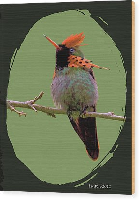 Tufted Coquette Hummingbird Wood Print by Larry Linton