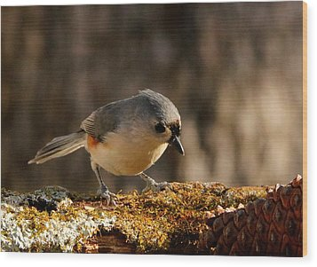 Tufted Titmouse In Fall Wood Print
