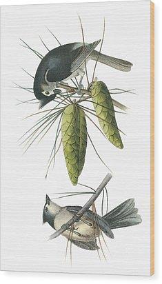 Tufted Titmoust Wood Print by John James Audubon