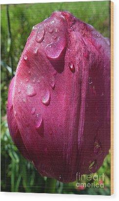 Tulip After The Rain Wood Print by Jean Bernard Roussilhe