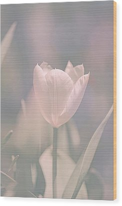 Wood Print featuring the photograph Tulip by Bob Orsillo