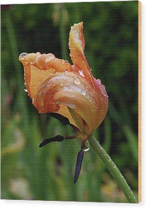Tulip Deconstructed Wood Print
