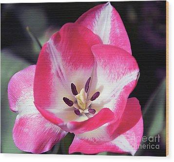 Wood Print featuring the photograph Tulip by Elvira Ladocki