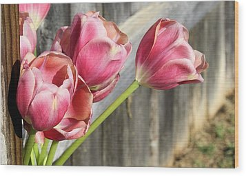 Tulip Fence Wood Print by Lynnette Johns
