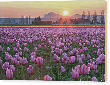 Tulip Field At Sunset Wood Print by Davidnguyenphotos