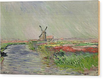 Tulip Field In Holland Wood Print by Claude Monet