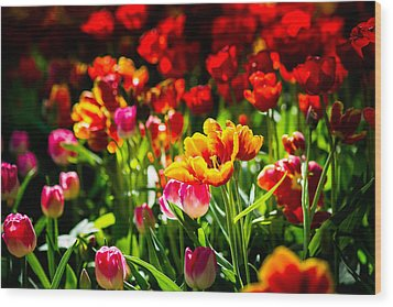 Wood Print featuring the photograph Tulip Flower Beauty by Alexander Senin