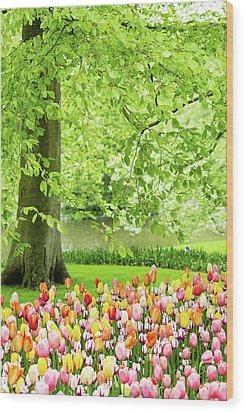 Tulip Garden - Amsterdam Wood Print