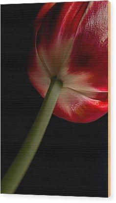 Tulip In Window Light Wood Print