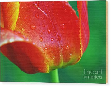 Wood Print featuring the photograph Tulip by Lila Fisher-Wenzel