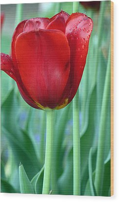 Tulip Wood Print by Michelle Joseph-Long