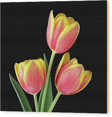 Tulip Passion Wood Print