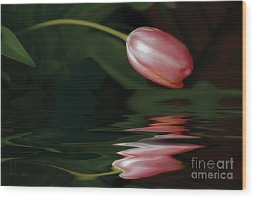 Tulip Reflections Wood Print by Elaine Teague