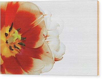 Tulip Statement Wood Print by Afrodita Ellerman