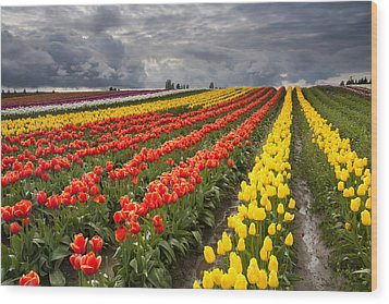 Tulip Storm Wood Print by Mike  Dawson