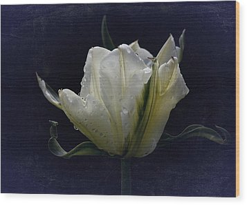 Wood Print featuring the photograph Tulip Tears by Richard Cummings
