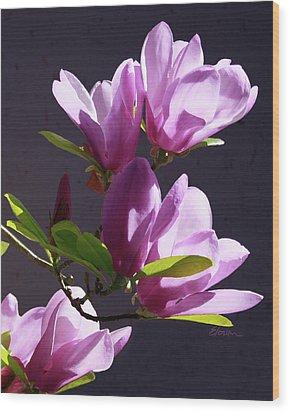Tulip Tree Wood Print by Elorian Landers