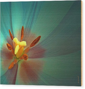 Wood Print featuring the photograph Tulip Trends by Gwyn Newcombe