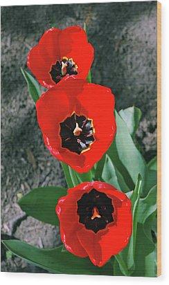 Wood Print featuring the photograph Tulip Trio by LeeAnn McLaneGoetz McLaneGoetzStudioLLCcom