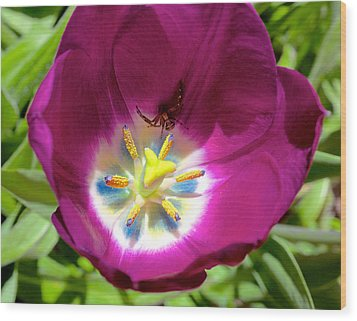 Wood Print featuring the photograph Tulip With Garden Spider by Trever Miller