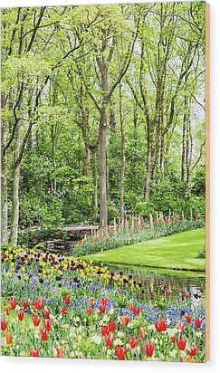 Tulip Wonderland - Amsterdam Wood Print