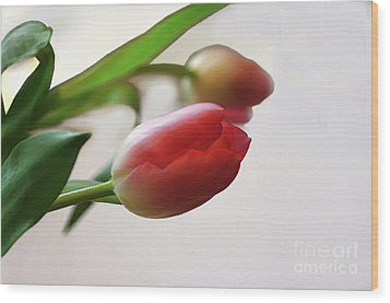 Wood Print featuring the photograph Tulipa by Jacqi Elmslie