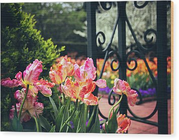 Tulips At The Garden Gate Wood Print by Jessica Jenney