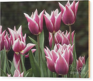 Tulips Bed  Wood Print