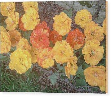 Tulips Double Flowering Wood Print